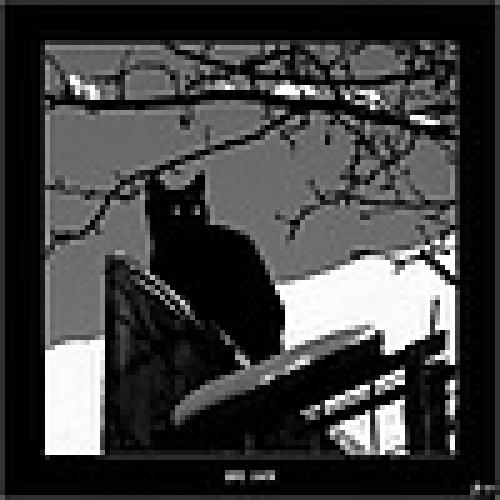 Черная кошка - жертва предрассудков или олицетворение сил зла